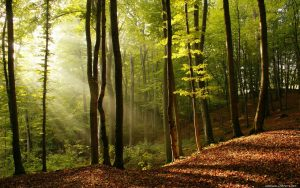 Affordable Tree Services in Braselton
